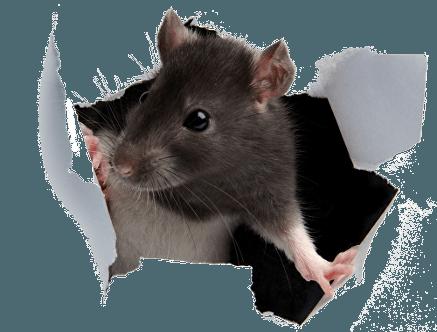 pest control company in darwen