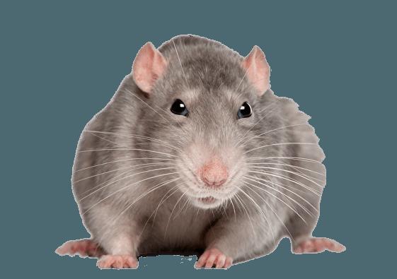 pest control service darwen